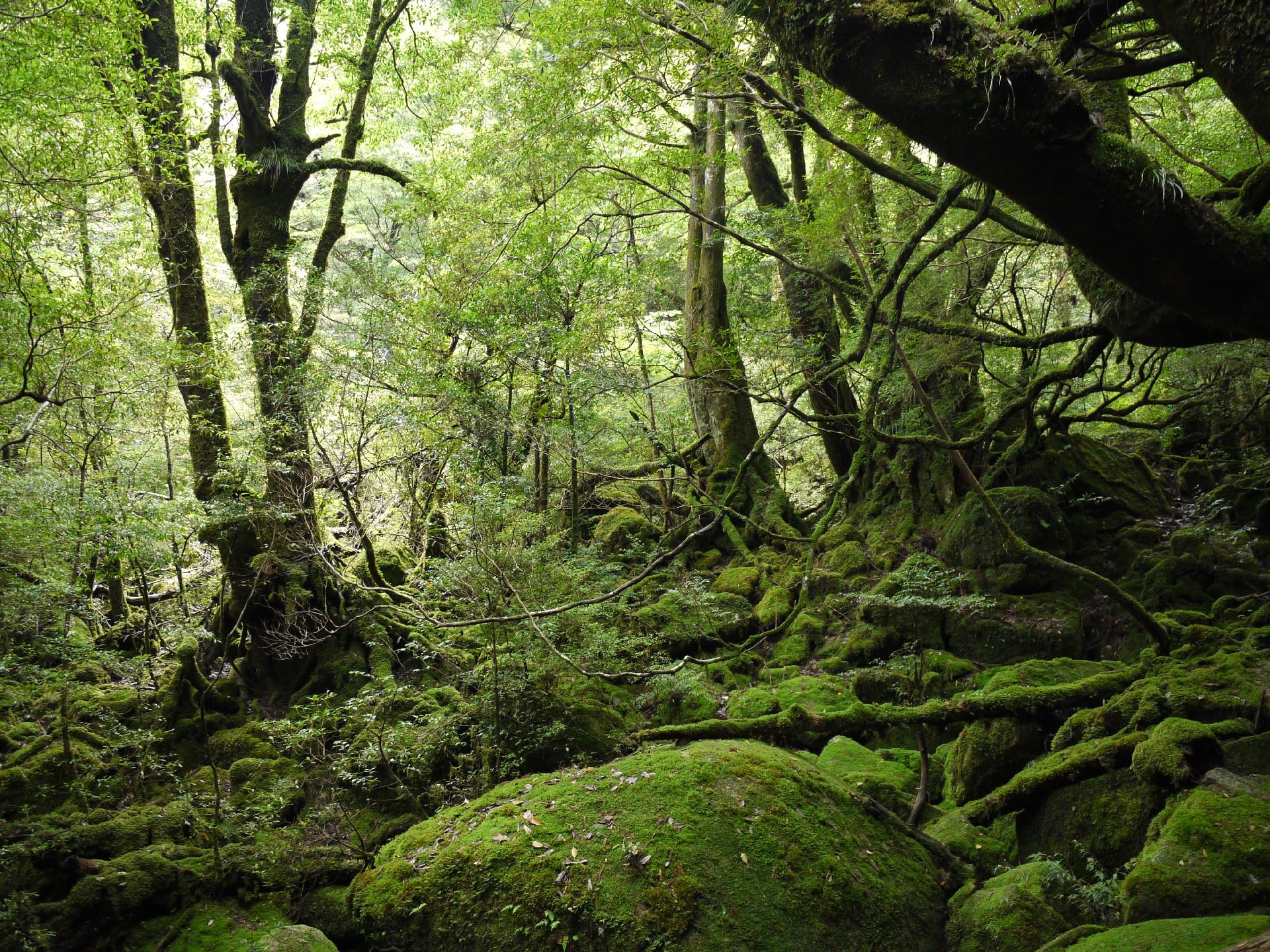 鹿児島県屋久島